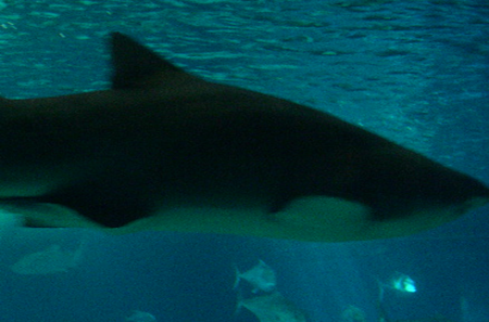 requin zoo france