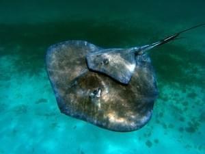 Plongée à la Martinique
