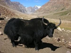 Escapade au Tibet