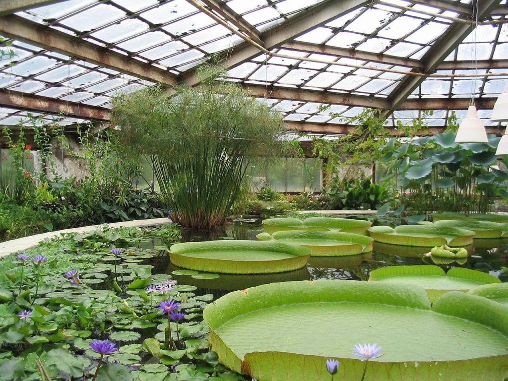 Jardin Botanique de Saint Petersbourg