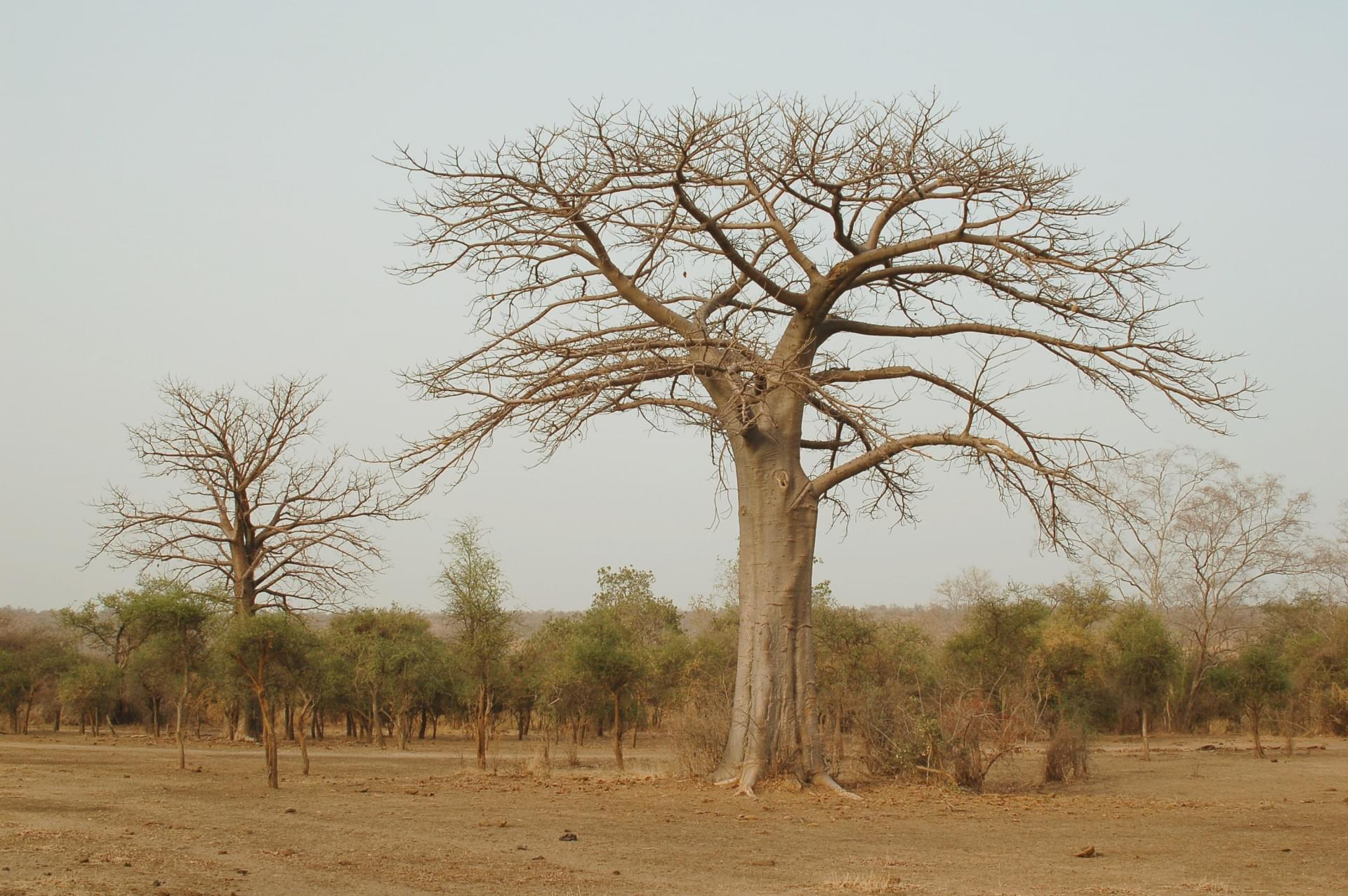 Parc National W - Niger