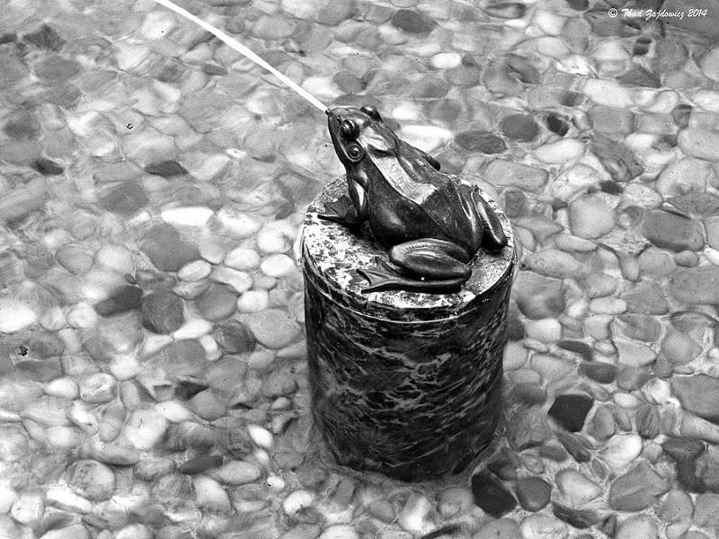 Spitting frog - Explored