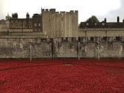Ceramic Poppies displayed at the Tower of London