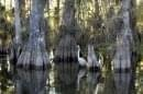 Le Parc national des Everglades