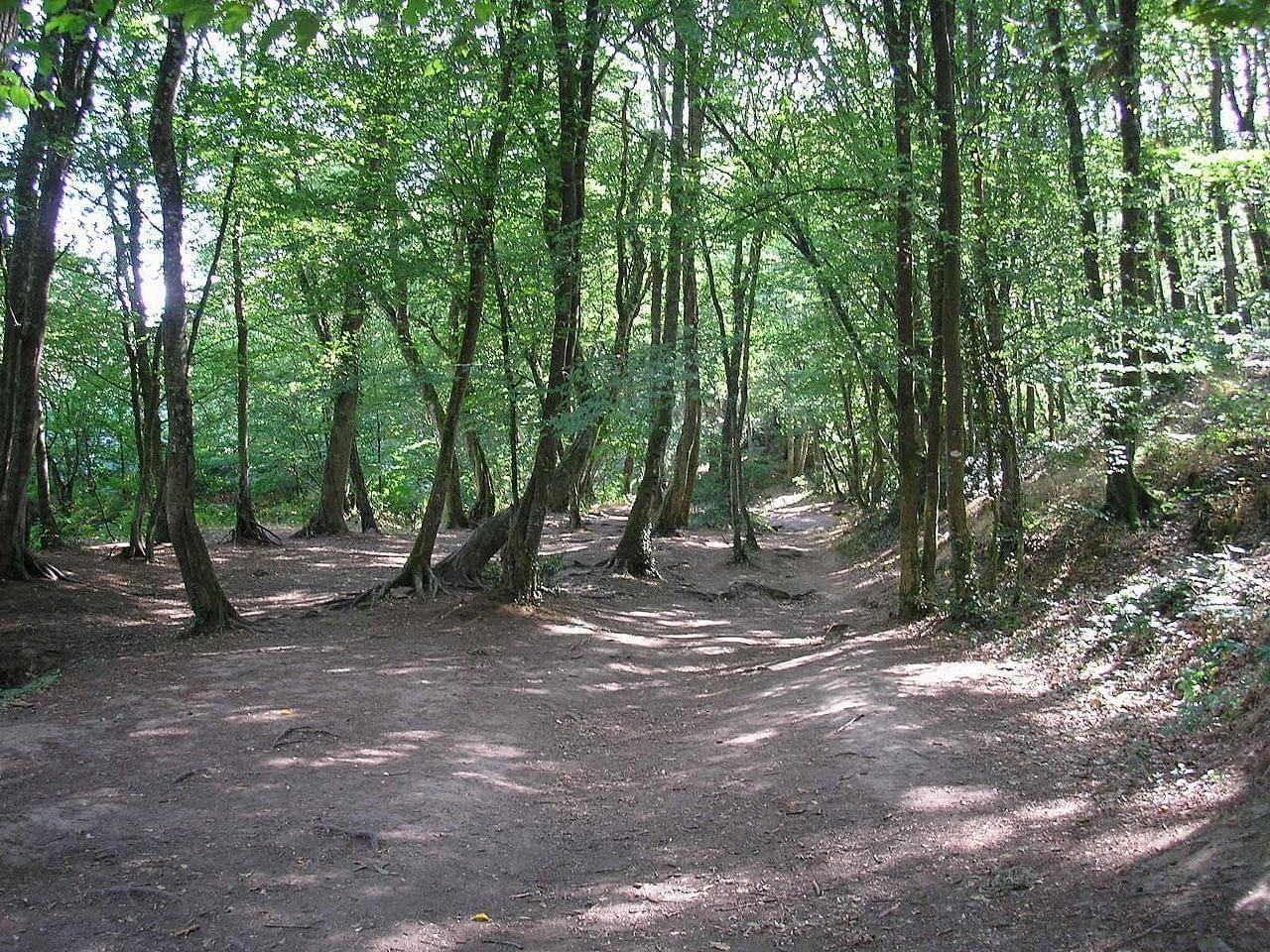 Photo Forêt de Brocéliande