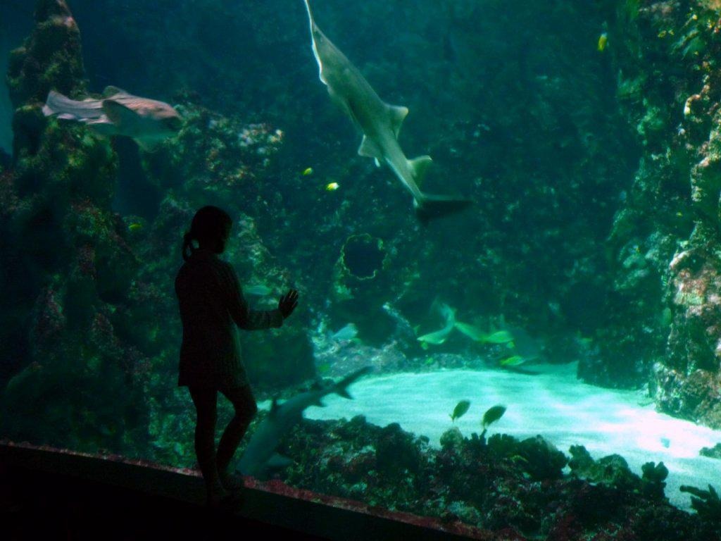Photo Le Top 10 des aquariums en France
